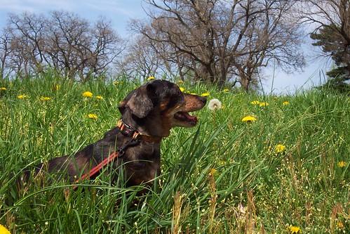 Uso de florais em cães -  PetLove