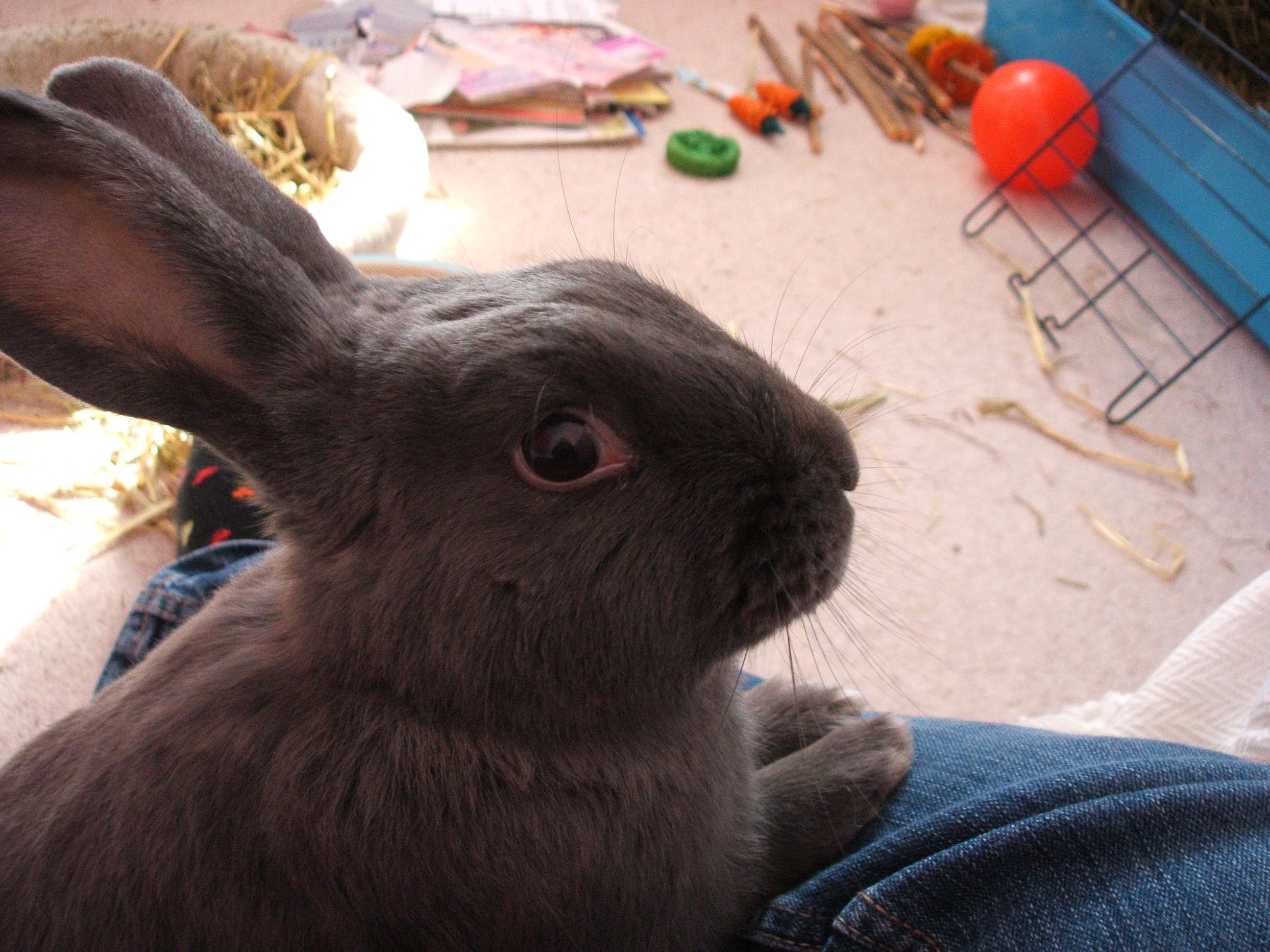 My tiny bunny