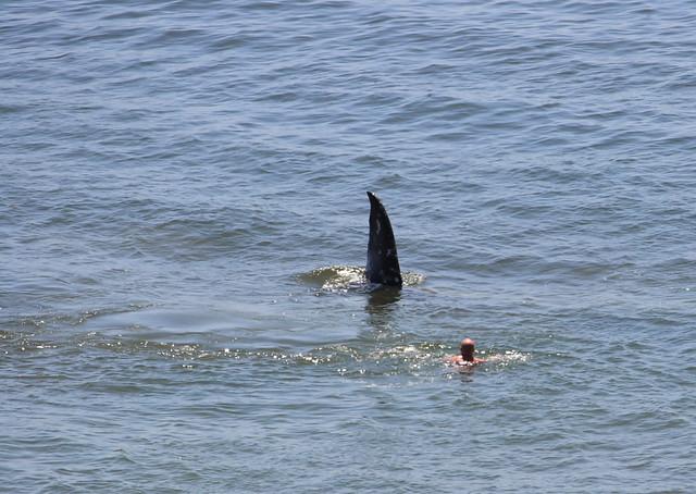 shark attack?