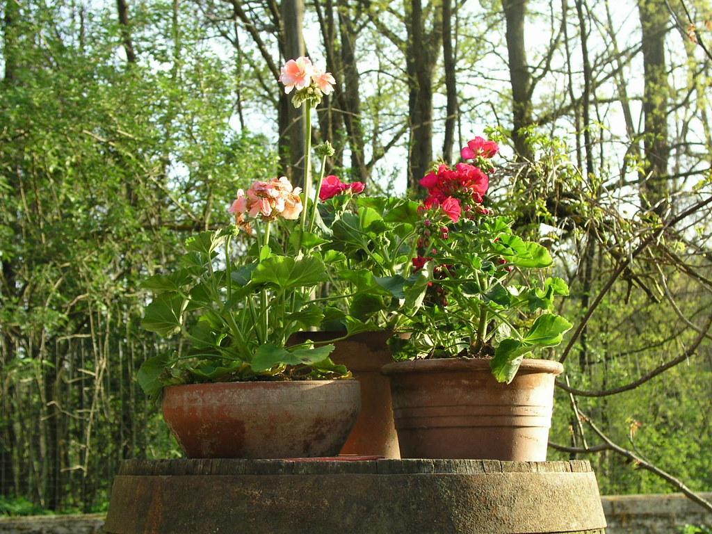 Giardino Di Una Casa il giardino della casa a capriglio   gerani al sole   siomar