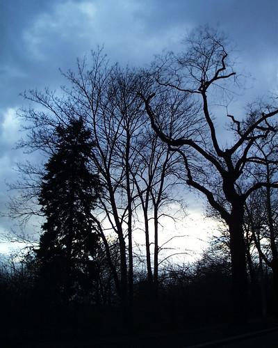 Pulsnitz-Dresden in der Heide kreisten rabenschwarz und dicht die Raben&