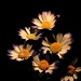 Flowers surrounded by darkness - explore 22 February 2017 thanks by Jo Evans1 - Off and on for a while
