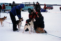 dog, vehicle, snow, mushing, sled dog racing,