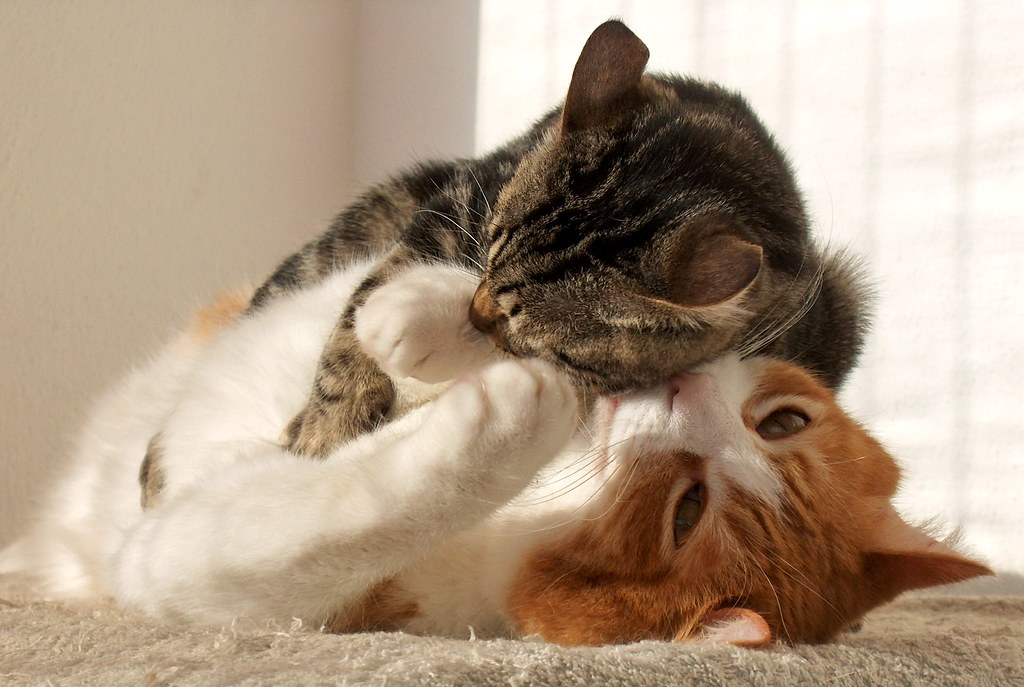 uomoelettrico's most interesting Flickr photos   Picssr Bestofcats