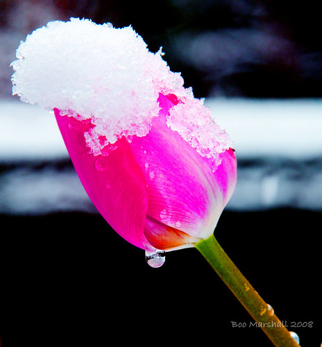 Snow Pink and the Diamond Droplet