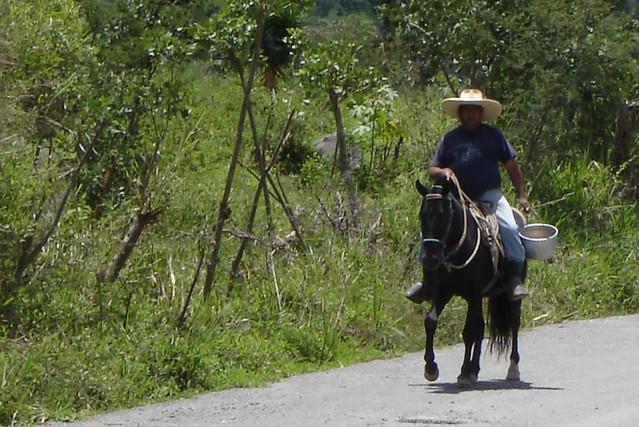 Header of paisano