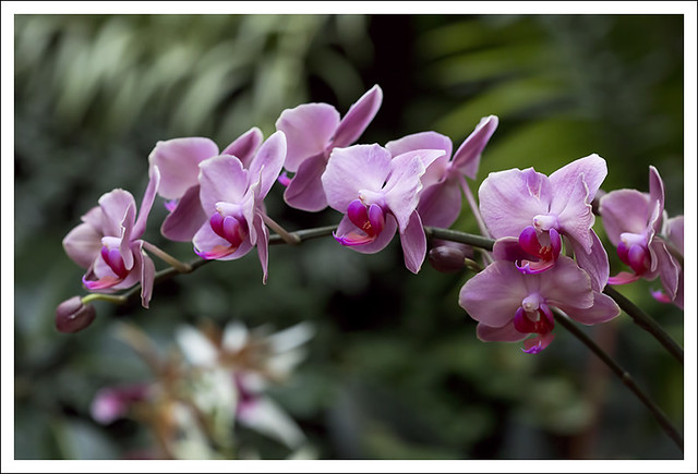 2014 Orchid Show 10