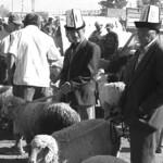 Karakol Animal Market, Bargaining - Karakol, Kyrgyzstan