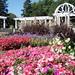 Lakeside Rose Garden | Fort Wayne, Indiana
