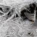 Ice Crystals