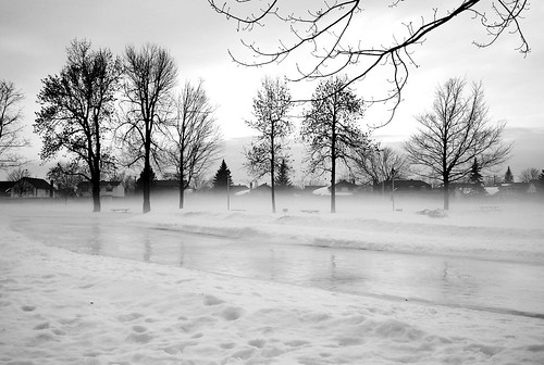 park trees winter bw snow cold ice nikon reflexion d80 bwartaward