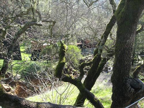 napa, calistoga ranch, moss, green IMG_1314