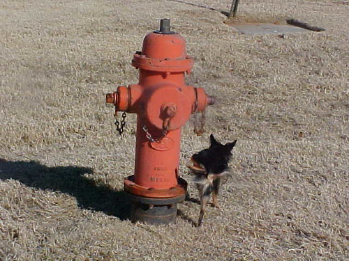 Itzl Peeing on Fire Hydrant