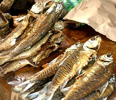 animal, smoked fish, fish, fish, seafood, oily fish, food, shishamo,