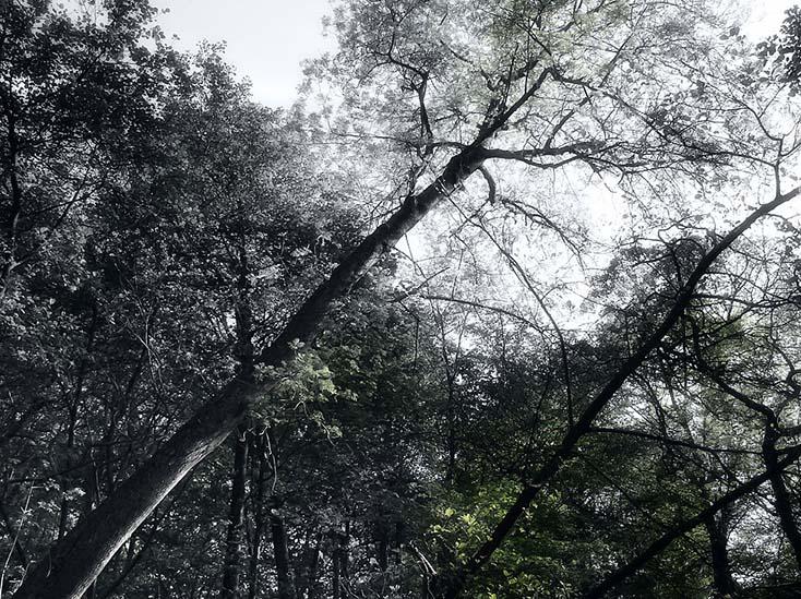 Photography - Diagonal Tree by Nicholas M Vivian