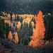 senescence by Derek T. Vincent