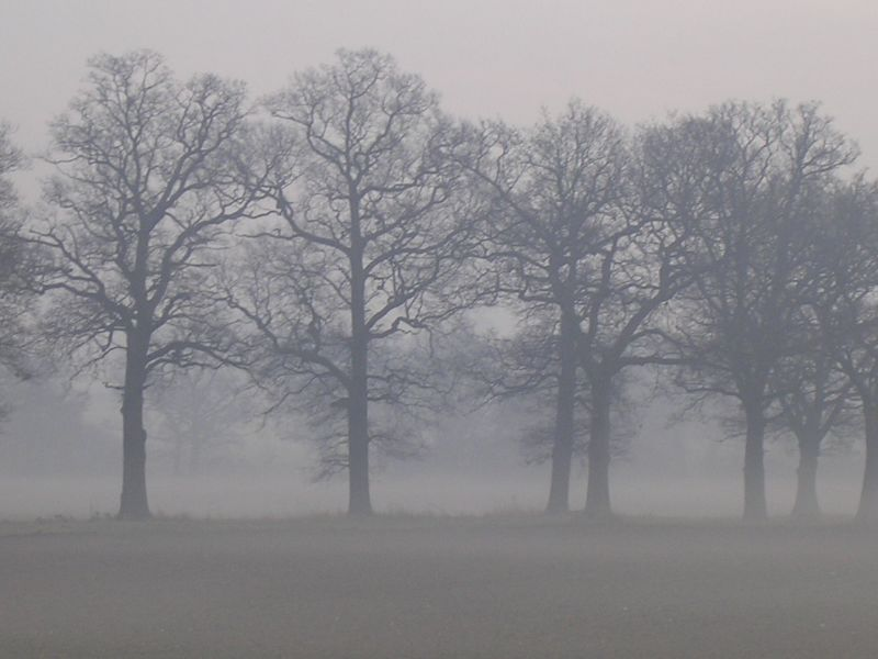 trees in the mist Dorking to Reigate