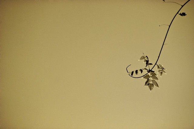 A simple branch