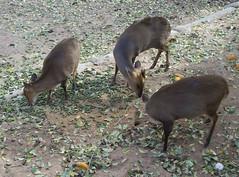 little deer things.jpg
