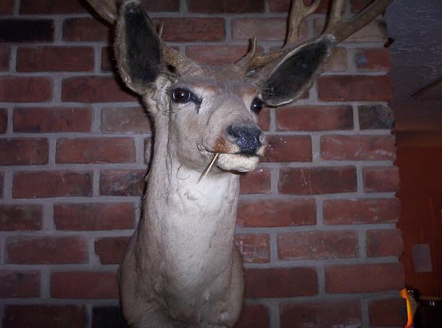 Deer Looking Cool Flickr Photo Sharing