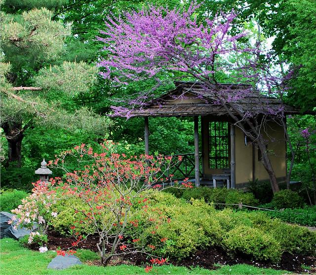 Minnesota landscape arboretum japanese garden flickr for Japanese garden landscape plants