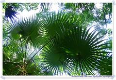 20041020_Guana@BVI_Palm Ghut_003_A