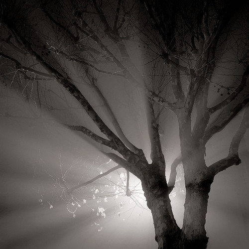Light rays. Clapham common.