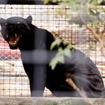 San Diego Zoo 036