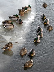 Not All, But Most, Of Your Ducks In A Row...Kinda