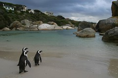 Penguins, Boulders Beach, Simonstown, South Africa