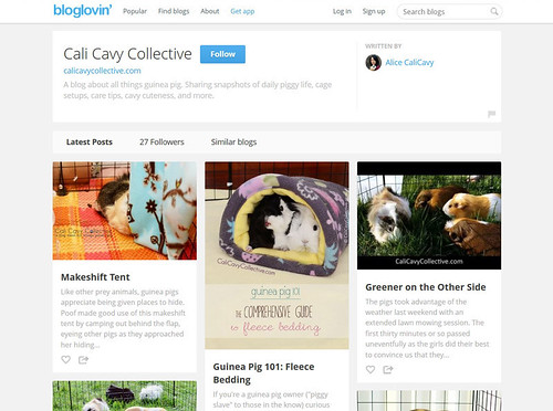 Cali Cavy Collective guinea pig blog on bloglovin