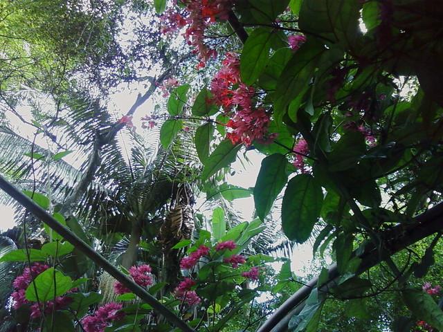 Jardim Casa das Rosas 05  Flickr  Photo Sharing!