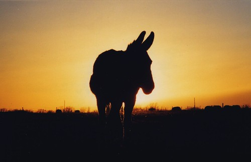 sunset ass texas farm donkey olympus om10 huntcounty campbelltx