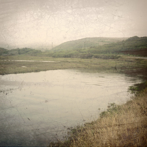 120 tlr film rolleiflex fuji dusk fnd marincounty marsh pointreyes textured freshwater pro400h drakesestero cal09