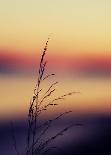winter sunset orange grass yellow fauna nikon dusk maine nikond40