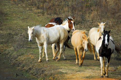Equine Traffic Jam