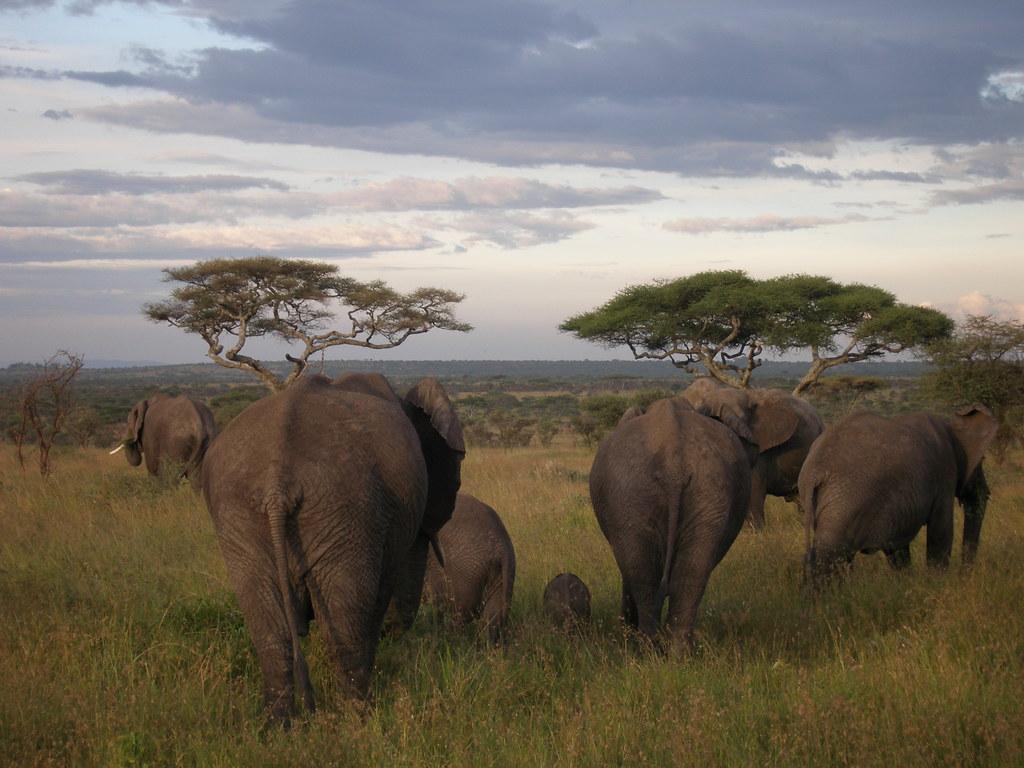 elephants06