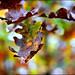 last autumn colours by heavenuphere