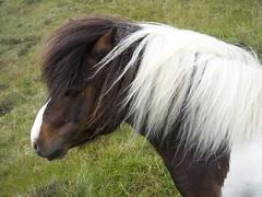 stallion(0.0), halter(0.0), animal(1.0), mane(1.0), mare(1.0), grass(1.0), mammal(1.0), horse(1.0), fauna(1.0), mustang horse(1.0), pasture(1.0), pony(1.0),