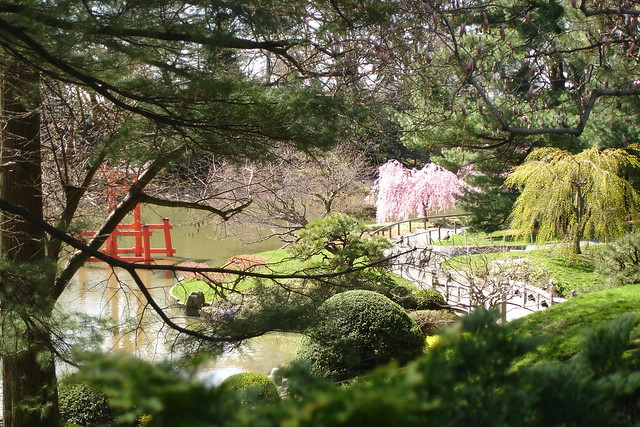 Japanese Hill-and-Pond Garden during Hanami 2008. Photo by Dave Allen
