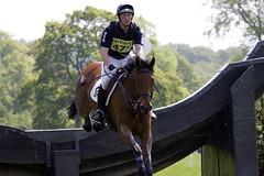 animal sports, equestrianism, english riding, racing, eventing, stallion, equestrian sport, sports, outdoor recreation, horse, jockey,