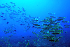 coral reef, coral, coral reef fish, sea, marine biology, underwater, reef,