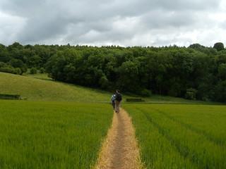 Path through crops