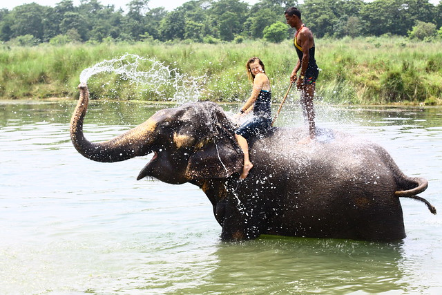 Grace bathes with elephant in Nepal