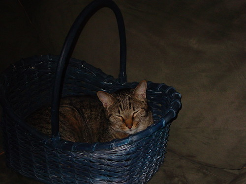 Clive gets cozy in a basket