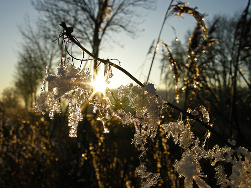 Shine like hoarfrost.
