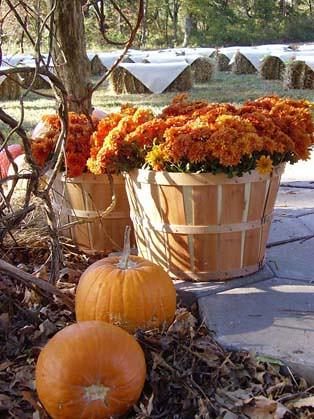 Photo for Fall outdoor wedding reception ideas