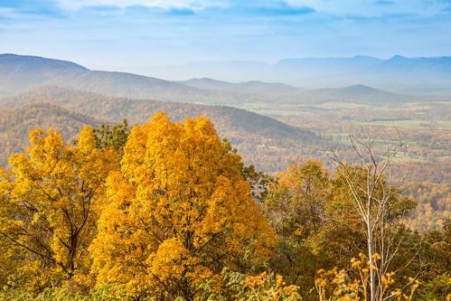 autumn foliage tree nature nationalpark gold shenandoahnationalpark color yellow landscape mountain fall shenandoah frontroyal virginia unitedstates us