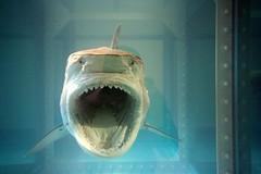 art shark