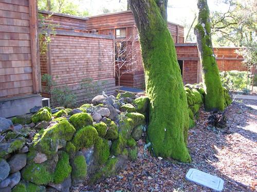napa, calistoga ranch, moss, green IMG_1325